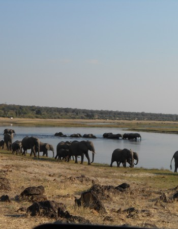5 Day CHOBE NATIONAL PARK & VICTORIA FALLS SAFARI with exclusive accomodation in small lodges