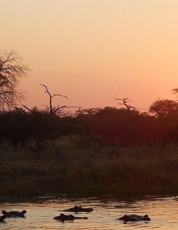 11 Days BEST OF NORTHERN BOTSWANA and Victoria Falls Safari (ALL-INCLUSIVE)